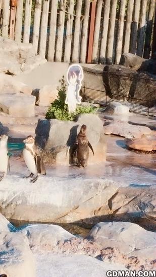 芙露露声优探望死宅企鹅爷爷,对其鹅生担忧